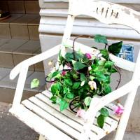 Blumen auf Stühlen