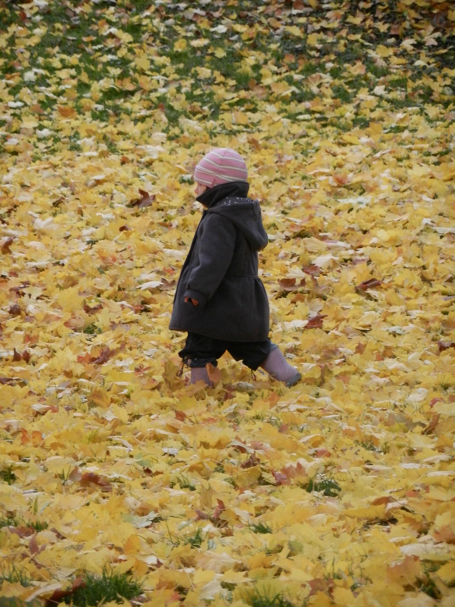 Herbstlaubspaziergang